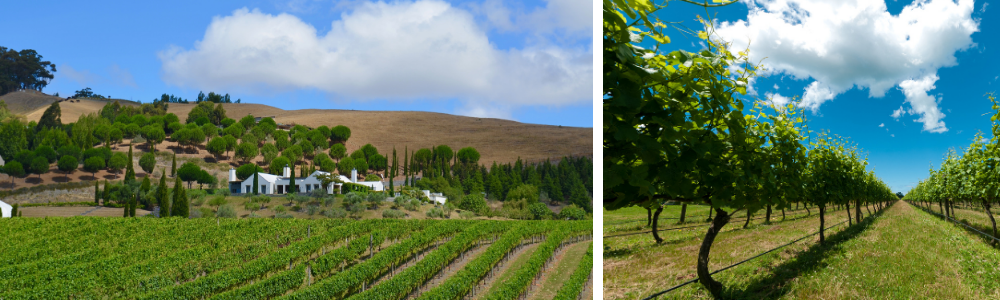 Wineries and Vineyard Tours, Hawke's Bay
