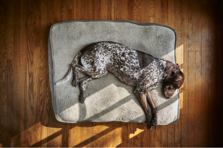 How to Wash a Dog's Bed: A Step-By-Step Cleaning Guide